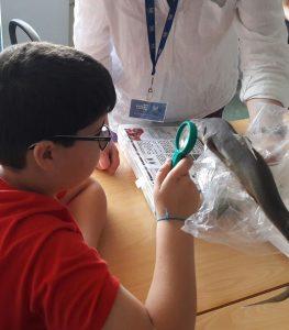 Um aluno observa com uma lupa a pele de um tubarão / cação.