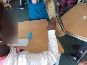 Uma aluna toca com a sua mão num exemplar de barbas de tubarão.