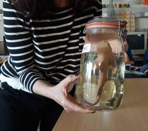 A mediadora cultural mostra aos alunos um espécime de tubarão conservado num frasco em clorofórmio.