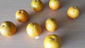As laranjas alinhadas em cima da mesa para se realizar o jogo da laranja.