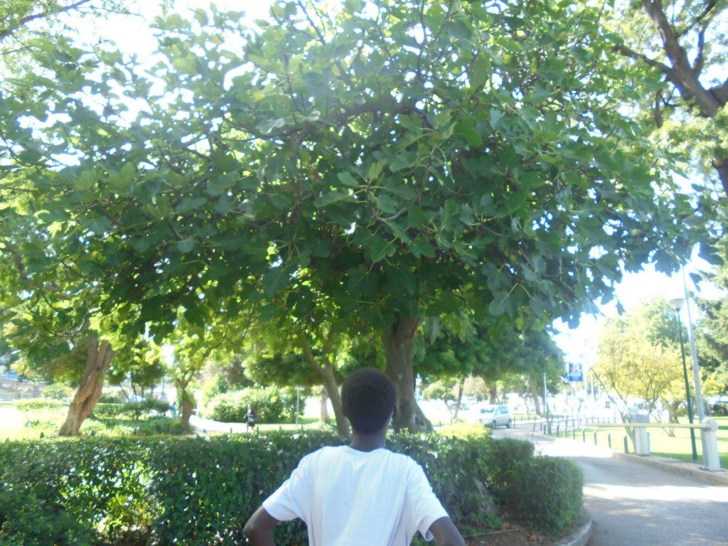 Aluno observa árvore no jardim do Hospital