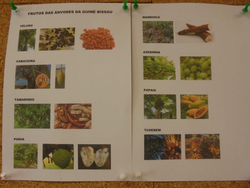 Frutos e nomes das árvores da Guiné Bissau