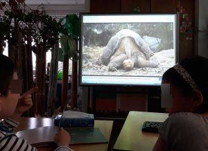 Os alunos visualizam uma espécie de tartaruga já extinta e referida na obra de Arianna Papini e trocam ideias entre si.