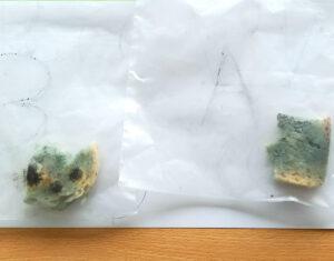 Os dois bocados de pão: o do saco A tem menos bolor do que o do saco B (sujeito à humidade) que tem bolor de vários tipos e cores.