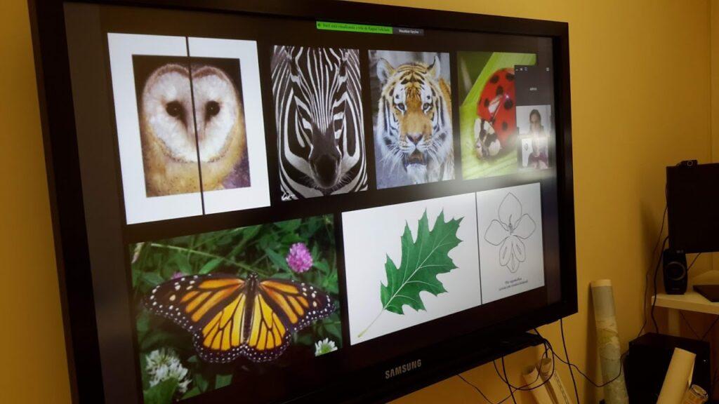 Ecrã com imagens de simetria na natureza - animais e plantas